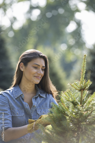 A woman pruning an organically grown Christmas tree.