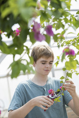 A young boy working in an organic nursery greenhouse.