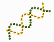 A double helix, intertwined spiral of small yellow corn maize kernels and dried peas, symbolising genetic engineering and research and food production.