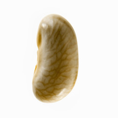 A single yellow flageolet bean, with a veining pattern.