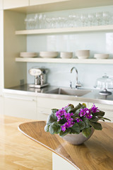 A traditional farmhouse kitchen with a kitchen island, and a bowl of African violet plants, pink Saintpaulia in flower.