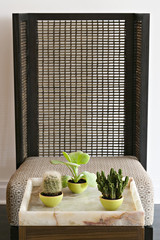A collection of three succulent cactus houseplants by a bamboo screen.
