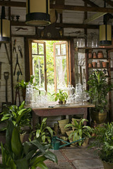 A room in a house with plants on every surface. Glossy green leaves.