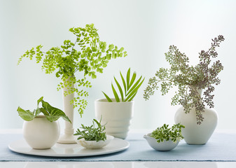 A group of containers, jugs and vases with a variety of green leaves and foliage. Studio shot.