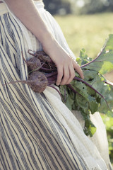 A girl in a striped skirt harvesting beets, fresh vegetables from a field of crops.