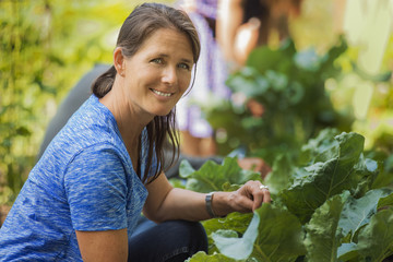 A traditional organic farm in the USA. A woman picking vegetables.