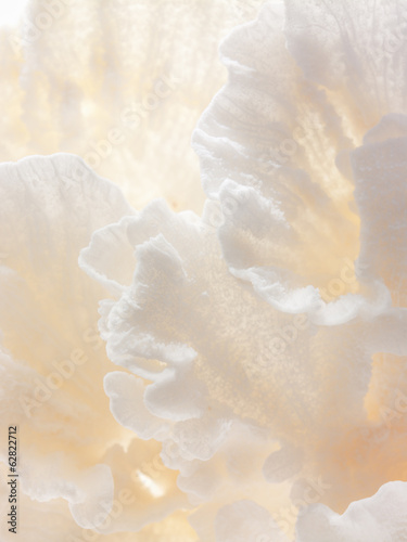 Still life and close up of small delicate textured cream coloured objects.