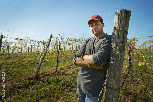 A vineyard with young vines being trained along wires to produce a good grape harvest.