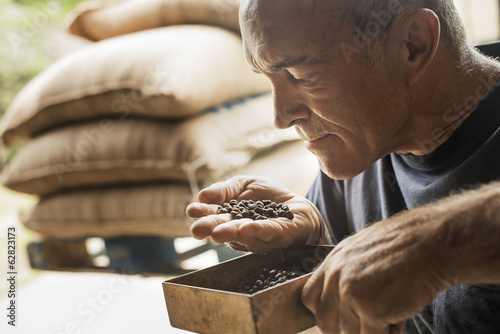 A man examining and smelling the aroma of beans at a coffee bean processing shed, on a farm.