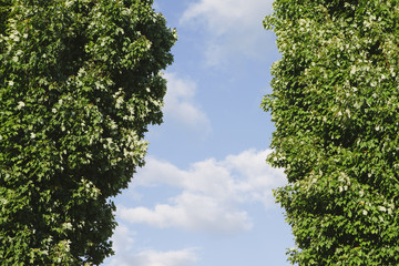 Two trees with green foliage
