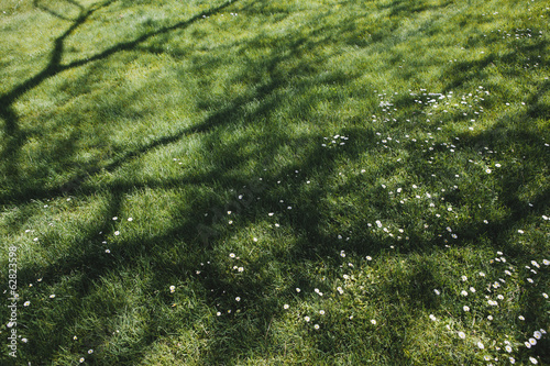Lush green grass of a lawn with trees casting shadows on the surface, providing cool shade.