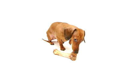 HD - Dog with bone_scene01