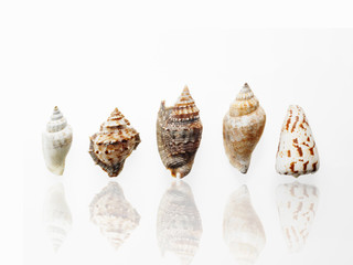 Sea shells in a row, showing a variety of size, shape and pattern.