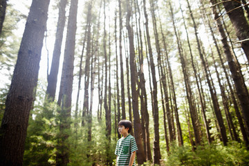 A young boy playing in the pine forest, surrounded by tall straight tree trunks.