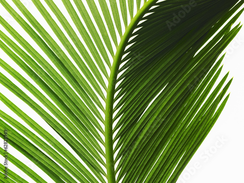 A glossy green palm leaf in close up, with central rib and paired fronds.