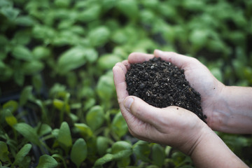 A person holding a handful of dark organic compost.