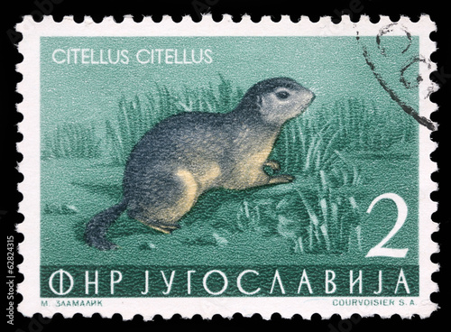 A stamp printed in Yugoslavia shows the European squirrel, 1965