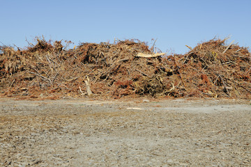 Pile of wood and tree debris