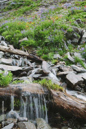 Cascading waterfall and blooming wildflowers