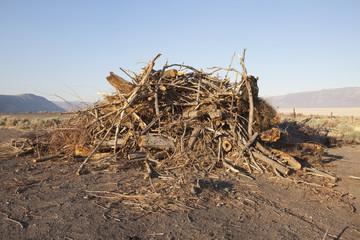 A pile of wood debris and shavings.