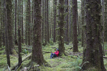 Man sitting among moss-covered Hemlock and Spruce trees in lush temperate rainforest of the Hoh forest in Washington, USA