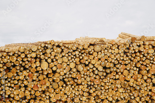 Stacks of freshly cut logs
