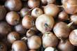 Organic Yellow Onion just harvested