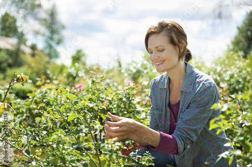 A woman in a blue shirt working at an organic farm, in the glasshouse or greenhouse.