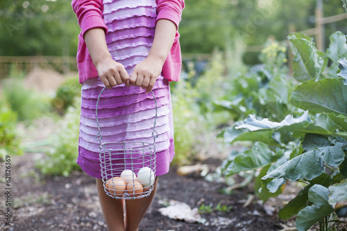 A young girl holding a wire basket of fresh hen's eggs, white and brown, in an organic vegetable patch.
