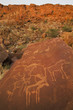 The ancient rock art carved on smooth sandstone at Twyfelfontein World Heritage Site at Uibasen Conservancy, Damaraland, Namibia.