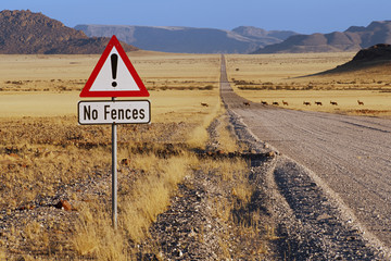 Red hartebeest crossing road, Alcelphus buselaphus, NamibRand Nature Reserve, Namibia