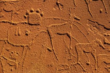 Rock art engravings at Twyfelfontein World Heritage Site at Uibasen Conservancy, Damaraland, Namibia