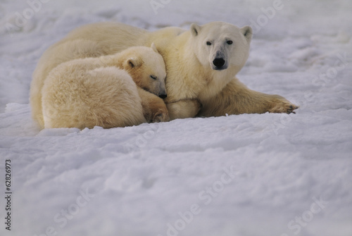 Polar bear mother and cub resting, Ursus maritimus, Hudson Bay, Canada