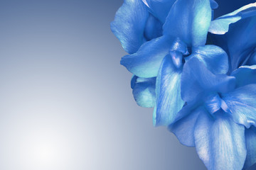 fondo de flor azul