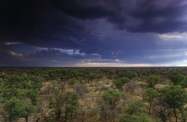 Storm clouds over the mopane woodland of the Okavanga Delta, Botswana