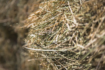 Close up of hay stalks in a bale. Animal fodder and bedding for the winter months.