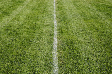 White centre line on freshly cut grass. A sports playing surface.