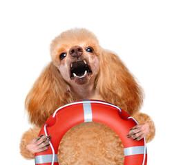 Dog rescuer.