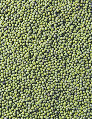 Mung beans, also known as green gram or golden gram, native to India.