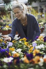 A woman working tending flowering plants on a workbench in a bin a glass house.