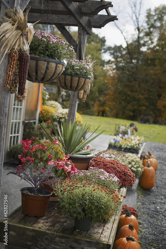 An organic farm stand. Display of vegetables, fruit and flowers.