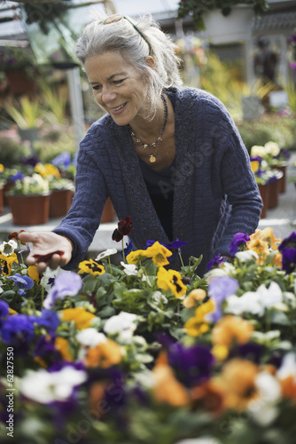 A woman working tending flowering plants on a workbench in a bin a glass house.