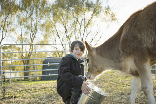 A young boy feeding a calf by bucket in a paddock at an sanctuary.