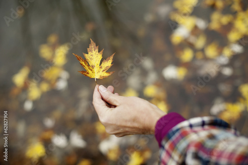 A woman holding out an autumn leaf. A maple leaf turning brown.