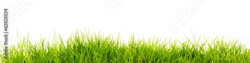 Fresh spring green grass with soil isolated on white background. - 62828334