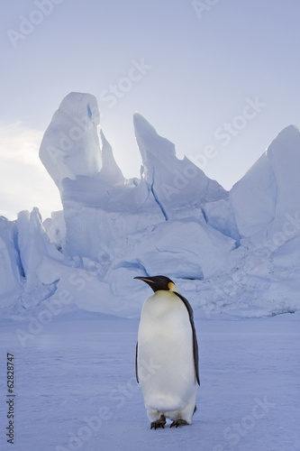 An adult Emperor penguin standing on the ice in shadow, with head turned sideways, on Snow Hill island in the Weddell Sea.