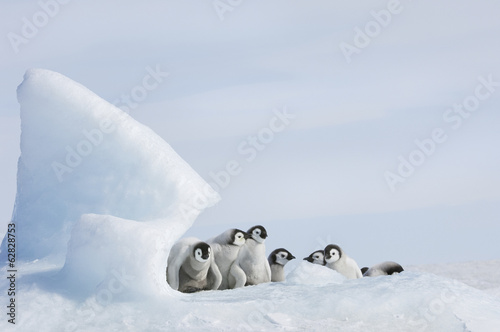 A nursery group of young penguin chicks, with thick grey fluffy coats, grouped beneath a pinnacle of ice.