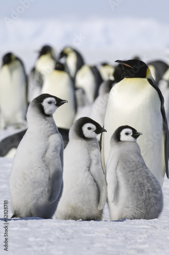 A group of emperor penguins standing on the ice on Snow Hill Island.