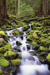 A stream flowing over moss covered rocks in the Olympic National Park, in Washington State.