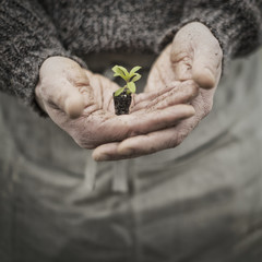 A person in a commercial glasshouse, holding a small plant seedling in his cupped hands.